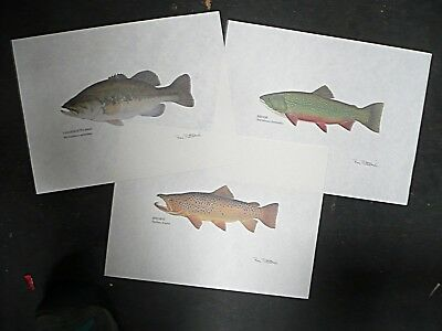 Three fish lithographs: Largemouth Bass Brook Trout, Brown Trout