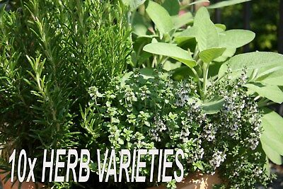 BIG HERB SEED COLLECTION - 10x Mixed Variety Packets of Fresh Herb Seeds