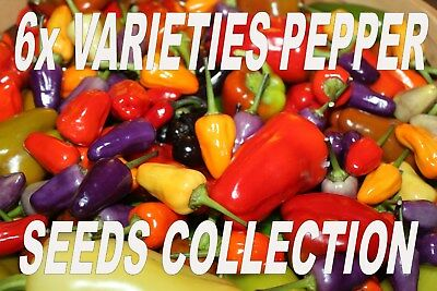 6x DIFFERENT VARIETIES CHILLI PEPPER SEEDS, JALAPENO, CAYENNE, CHILLI WILLY ETC!