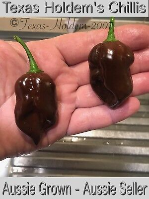 Devil's Tongue Chocolate - A Rare and Extremely Hot Chilli Pepper - 15 Seeds