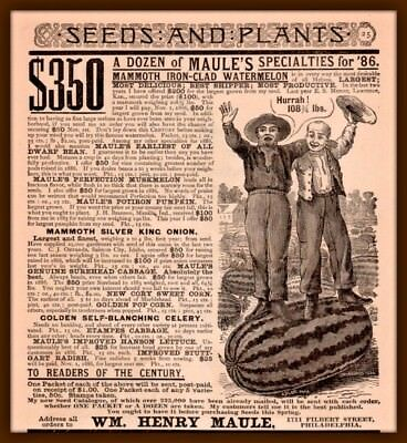 1886 A Ad Maule Seeds Iron Clad Watermelon 108 Lbs Blanc Engraving Happy Farmers