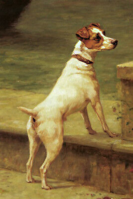 Vintage Painting Print On Canvas Ready to Hang  Jack Russell Terrier Dog
