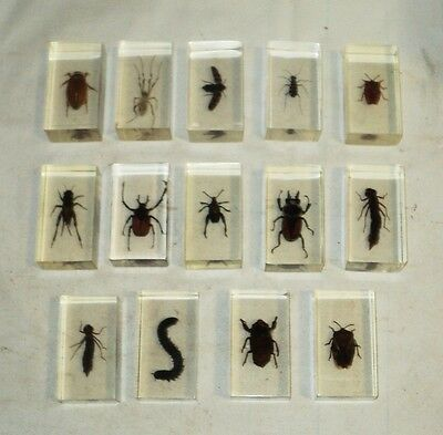 REAL INSECTS BUGS PAPERWEIGHT MEDIUM SIZE! IN acrylic resin  14 pieces!