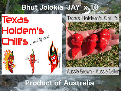 "Bhut Jolokia 'JAY"" Ghost Chilli: 10 Seeds - Extreme heat 1 million Scoville !!"