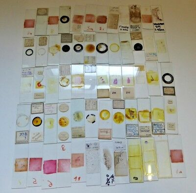 Job Lot of Antique and Vintage Glass Microscope Slides - Various Subjects Ref#A