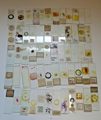 Job Lot of Antique and Vintage Glass Microscope Slides - Various Subjects Ref#B