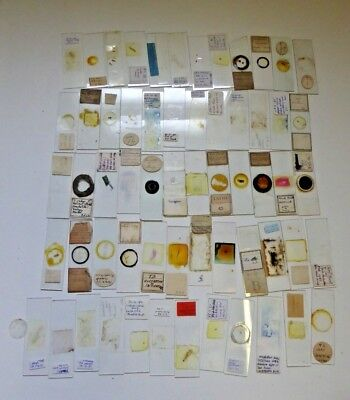 Job Lot of Antique and Vintage Glass Microscope Slides - Various Subjects Ref#C