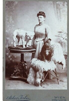 Vintage Foto photo card de visite CDV Portrait Wien Dog Hunde bulldog mastiff