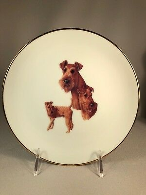 Vintage Porcelain Plate Features Irish Terrier Dogs, Signed Hlc