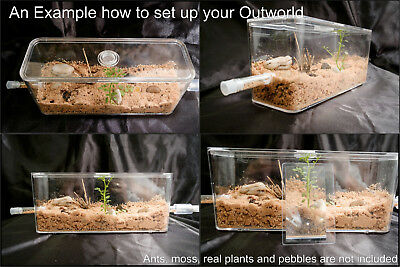 Medium Ant Spider Arena Formicarium Farm Ant Housing Your ant colony's Outworld