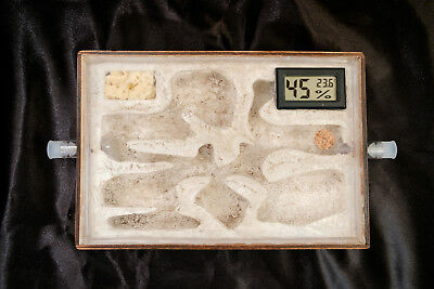Ant Hybrid Nest with Humidity and Temperature Meter Ant Farm A5 Wood+Acrylic