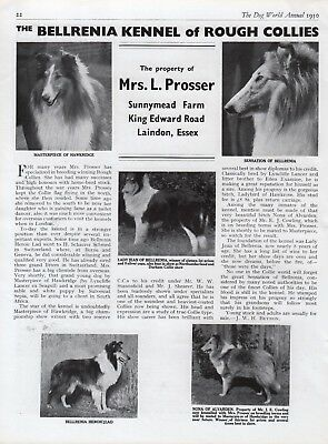 Rough Collie Dog World Breed Kennel Advert Print Page Bellrenia Kennel 1950