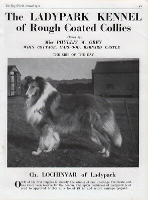 Rough Collie Dog World Breed Kennel Advert Print Page Ladypark Kennel 1950