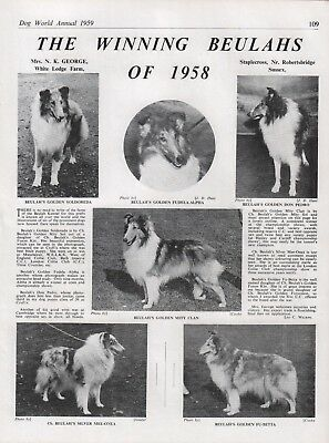 Rough Collie Dog World Breed Kennel Advert Print Page Beulahs Kennel 1959