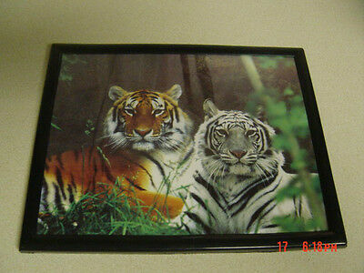 White Tiger And Tiger 8X10 Framed Picture