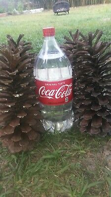 """Pine cone. Huge 7""""-10"""" tall 4""""+wide"""