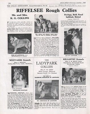 Rough Collie Our Dogs The Collie Association Breed Advert Print Page 1949