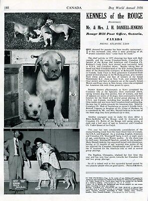 """Bullmastiff Dog Breed Kennel Advert Print Page """"Of The Rouge"""" Dog World 1956"""