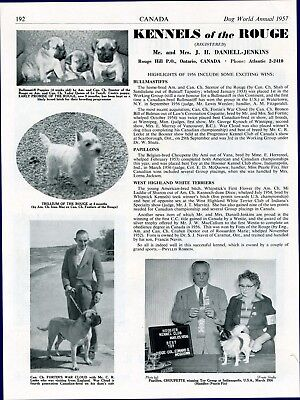 """Bullmastiff Dog Breed Kennel Advert Print Page """"Of The Rouge"""" Dog World 1957"""