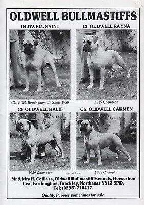 Bullmastiff Dog Breed Kennel Advert Print Page Oldwell Kennels Our Dogs 1998