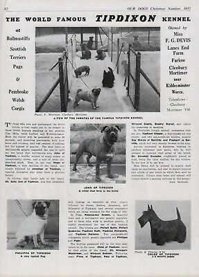 Bullmastiff Dog Breed Kennel Advert Print Page Tipdixon Kennels Our Dogs 1955