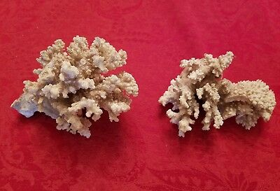 "Vintage Piece Large Natural White Brown Stem Ocean Sea Coral. ""Two"""