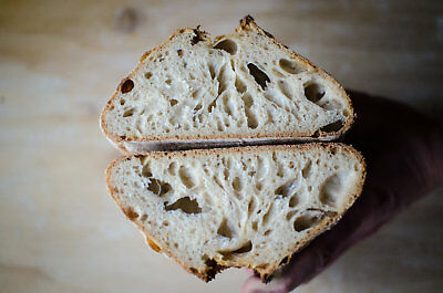 sourdough bread starter yeast from san francisco wharf recipes included @fresh