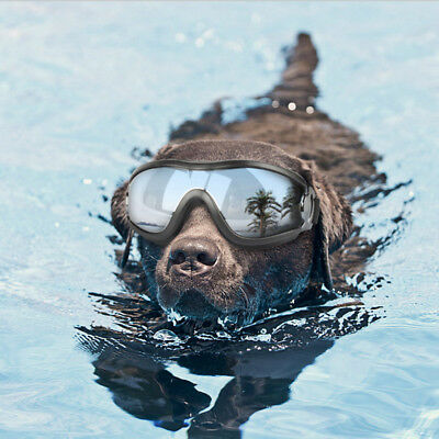 Adjustable Large Pet Dog Goggles Sunglasses Anti-UV Sun Glasses Eye Protection