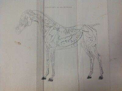 The Anatomy Of The Horse, Antique Prints c1868, 1 Print & A Series Of 16 Plates
