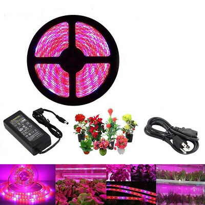 5M led Grow Light Hydro Full Spectrum Hydroponic Greenhouse Plant Lamp DC Power