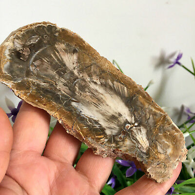 155g Beautiful Polished Petrified Wood Fossil Crystal Slice Madagascar my615