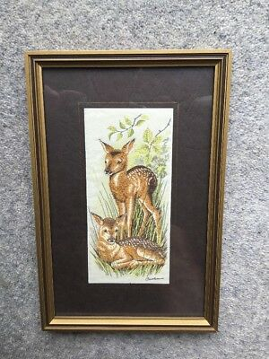 Cash's Woven Silk Picture: Red Deer Fawn: Framed/Glazed: c24x16cm
