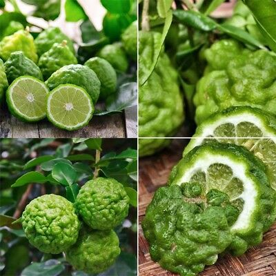 30PCS Rare Kaffir Lime Seeds Tree Plant Lemon Bonsai Seeds Pot Home Garden Decor