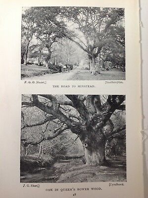 The Road To Minstead,  1921 Vintage RP Print/illustration