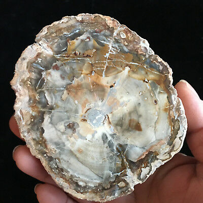 310g Beautiful Polished Petrified Wood Fossil Crystal Slice Madagascar 01108