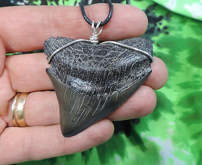 Nice 2 5/16'' Megalodon Sharks Tooth Necklace Jewelry Fossil Sharks Teeth