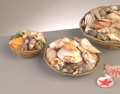 Mixed Shells in Basket - Small | Craft Shells Beach Seaside