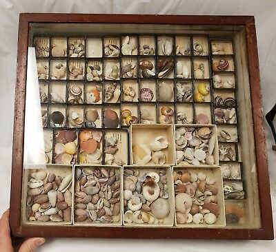 Antique Seashell Collection in Old Glass Case - Estate Fresh