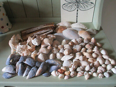 Large Collection Of Shells