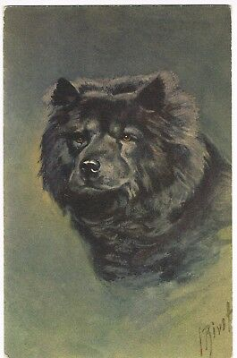 "ANTIQUE ARTIST SIGNED / ANIMAL Postcard         ""CHOW-CHOW"""