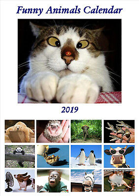 Funny Animals Calendar 2019 Portrait A4
