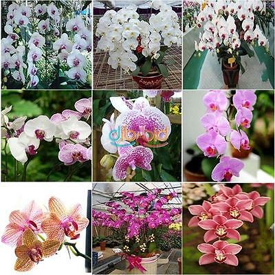 20/100 PCS Mix Phalaenopsis Flower Seeds Bonsai Plant Butterfly Orchid Seeds OZ