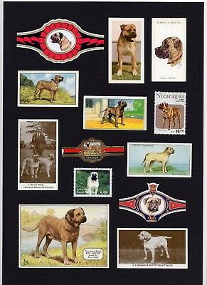 Bullmastiff Mounted Set Vintage Dog Collectable Cards Stamps And Bands