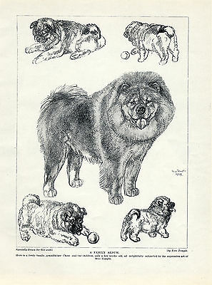 Chow Chow Dog And Puppies Lovely Original Dog Art Print Page From 1934