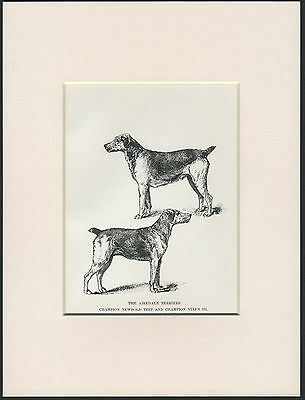 AIREDALE TERRIER NAMED CHAMPION DOGS OLD 1890's ANTIQUE DOG PRINT READY MOUNTED