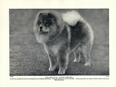Chow Chow Champion Named Dog Lovely Original Print Page From 1934