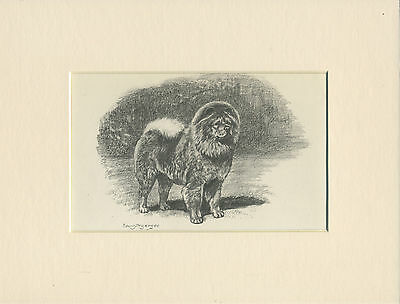 Chow Chow Old Original 1940'S Edwin Megargee Dog Print Ready Mounted
