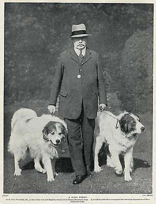 Great Pyrenees Pyrenean Mountain Dog Dogs And Gentleman Owner Old 1934 Print