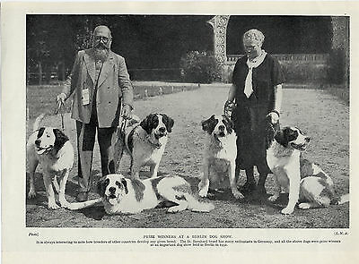 Saint Bernard Prize Winning German Dogs And Owners Old Original 1934 Dog Print