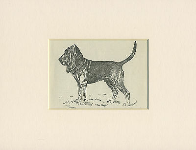 BLOODHOUND LOVELY OLD DOG PRINT FROM 1912 by ARTHUR WARDLE READY MOUNTED